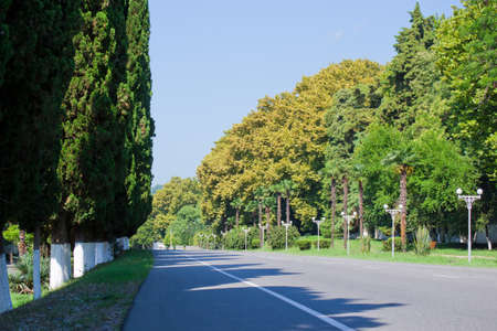 palm lined: Palm Tree Lined Road in sunny day