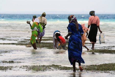 Women and children with colorful clothes looking for shellfishes in Zanzibar