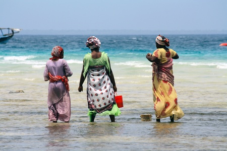 Women with colorful clothes looking for shellfishes in Zanzibar