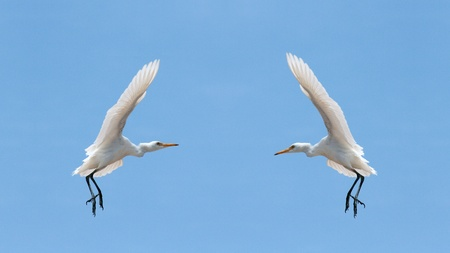 Two white birds in the sky of Sharm El Sheikh, Egypt Stock Photo
