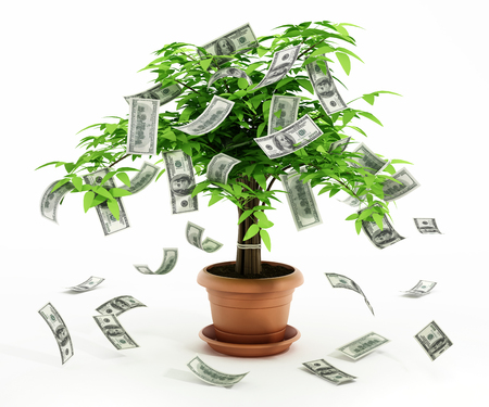 money growth: Money tree in the pot isolated on white background Stock Photo