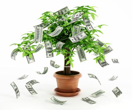 dinero: Árbol del dinero en el pote aislado en el fondo blanco Foto de archivo