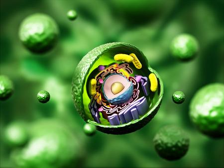 anatomia cellula animale su sfondo verde. illustrazione 3D. Archivio Fotografico