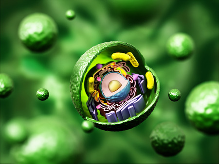 membrane: Animal cell anatomy on green background. 3D illustration.