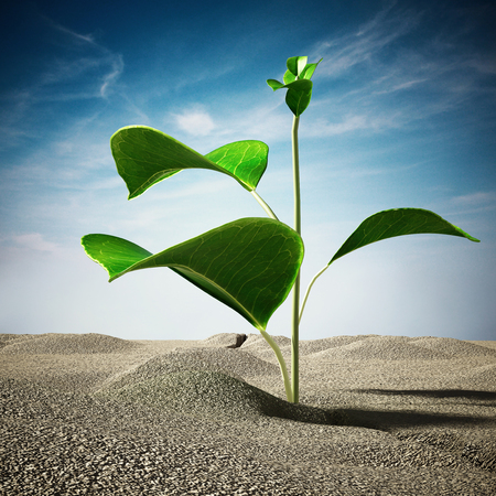 Sprout growing on the desert. 3D illustration.