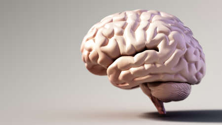 Human brain standing on soft color background. Copy space on the left. 3D illustration. 版權商用圖片