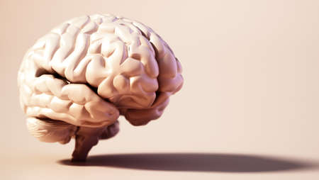 Human brain standing on soft color background. Copy space on the right. 3D illustration. 版權商用圖片 - 160523654