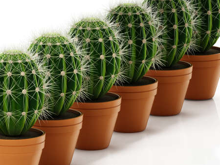 Group of cacti in flower pots isolated on white background. 3D illustration.
