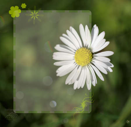 background template of flower close up and fresh green grass
