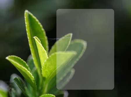 background template of green tea shoot