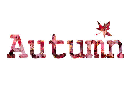 Autumn text design from Japanese maple tree leaves texture.
