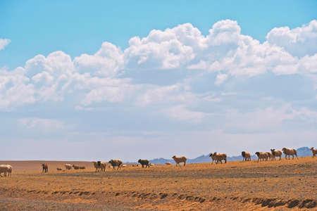 Mongolia yurt at Gobi desert at Mongolia.
