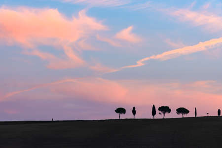 Cypress trees rows with copy space and sunset sky, Tuscany, Italy, Europe. 写真素材
