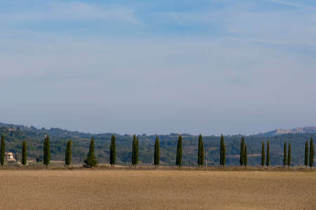 Cypress trees rows and copy space with blue sky, Tuscany, Italy, Europe. 写真素材