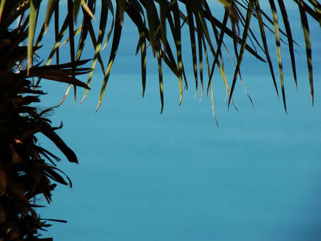 This palm tree frames clear blue water. Ideal for vacation brochures.