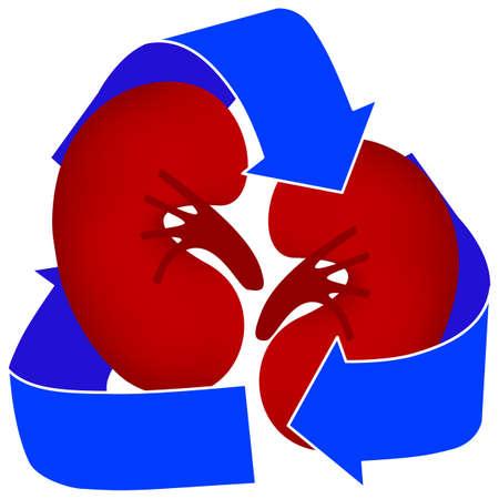 このアイコンを使用して、臓器の寄付や腎臓透析を表します。