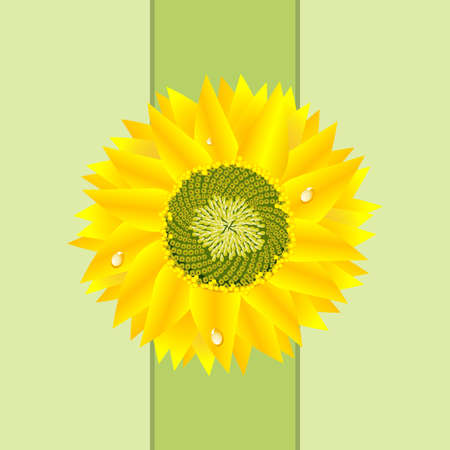 Detailed Sunflower Card Stock Photo