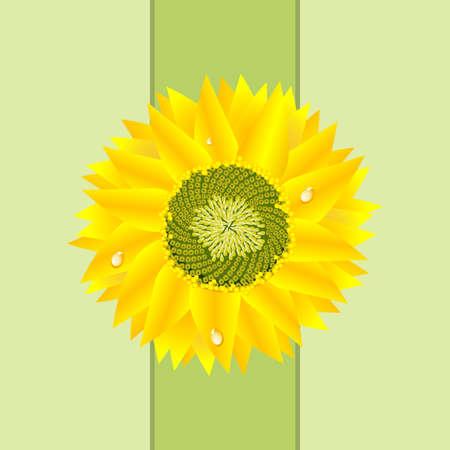 Detailed Sunflower Card Stock Photo