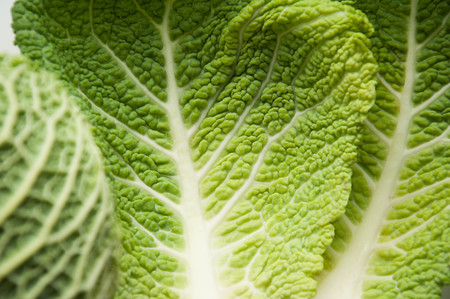 Savoy cabbage. The structure of the green leaf. Greenery. The background is natural. Fresh greens.