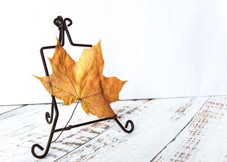 Autumn mood. Yellow, orange maple leaf on a wooden background. Natural materials Stok Fotoğraf