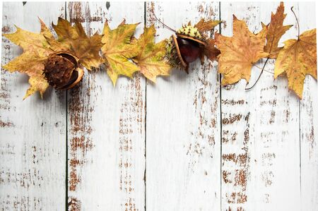 Autumn mood. Yellow, orange maple leaves on a wooden background. Lots of dry leaves and chestnuts. Natural materials Stok Fotoğraf