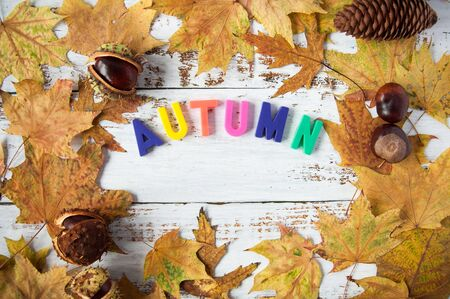 Autumn mood. Yellow, orange maple leaves on a wooden background, letters with the inscription autumn. A lot of dry leaves and chestnuts, a hot drink, comfort. Natural materials Stok Fotoğraf