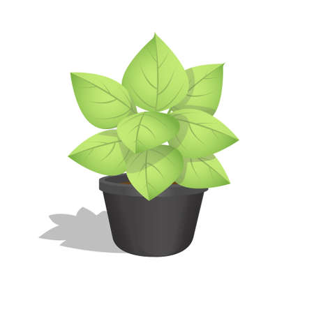 leafy: Green Leafy Plant Growing in a Pot with White Background.Vector Illustration.