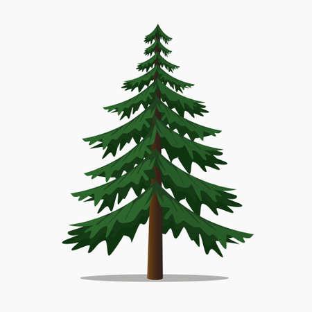 Los árboles de pino abeto del vector illustration.isolated y árbol de coníferas. Ilustración de vector