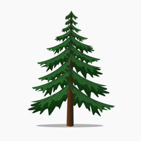 Pine Trees Vector Illustration.isolated Fir and Coniferous Tree.