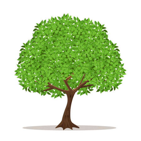Isolated shade tree on white background.Vector illustration.