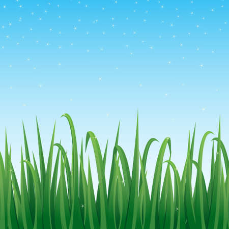 Lush green grass with blue sky background, vector illustration.