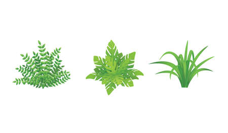 Green Plants Illustration Set.Garden bushes with Various Shape. Illustration