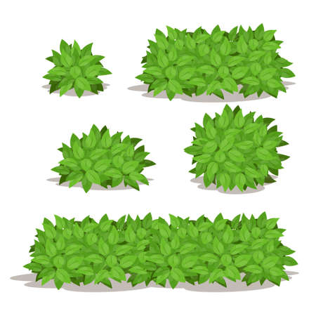 Various Isolated bush set.Different Shape of Bush Vector Illustration. Illustration