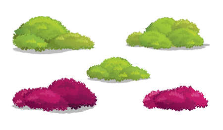Different Shapes of Bush.Vector Illustration of Shrubs. Illustration