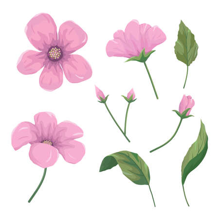Set of beautiful pink flowers, leaves and buds, vector illustration.