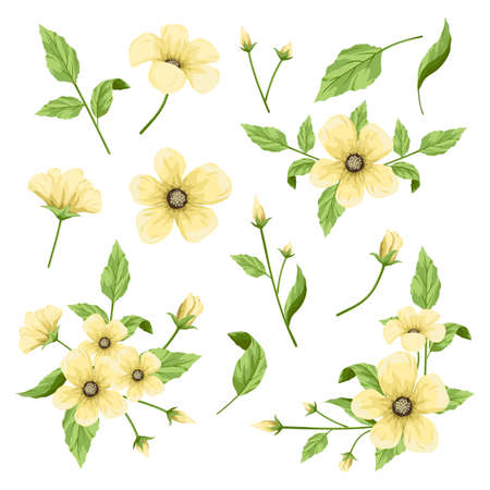 Flowers part collection, floral element vector illustration. Illustration