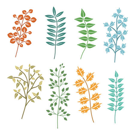 Colourful leaf clip arts set vector illustration. Illustration