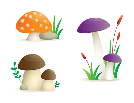 Mushroom set, different mushroom Illustration.