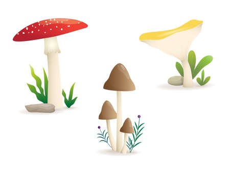 Different kinds of mushroom illustration.