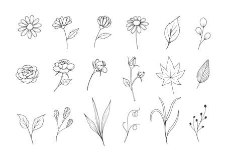 Flowers Sketch  Collection with Line Art Style Illustration