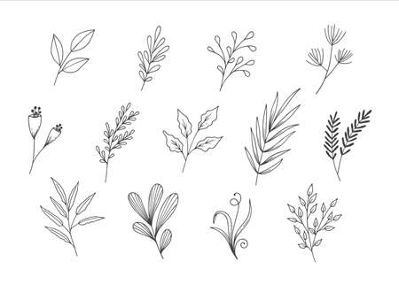 Collection of Natural Leaves Line Art Sketch Illustration