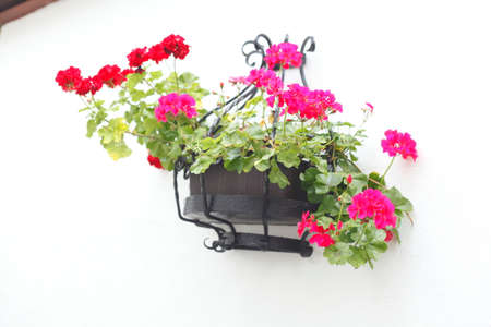 flower box: flower box on a house wall