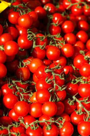 Fresh aromatic tomatoes