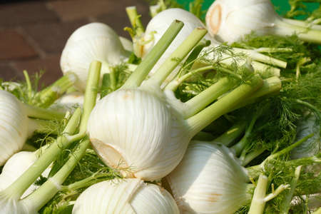 fennel: Fennel vegetable