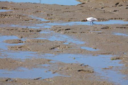 silt: Wadden Sea Stock Photo