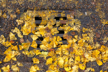 lid: colorful Autumn Leaves, Canal Lid