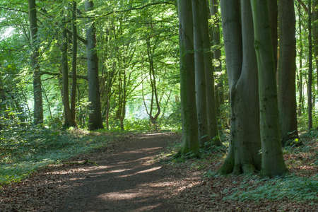 Path in a Wood,  Germany, Europe Stock Photo