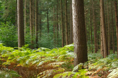 Trees and Ferns in a Wood