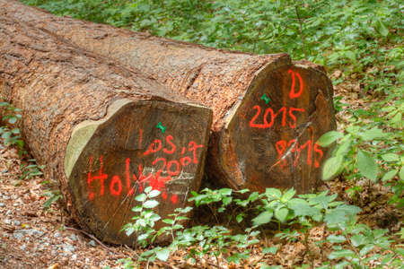 Logs in a Wood
