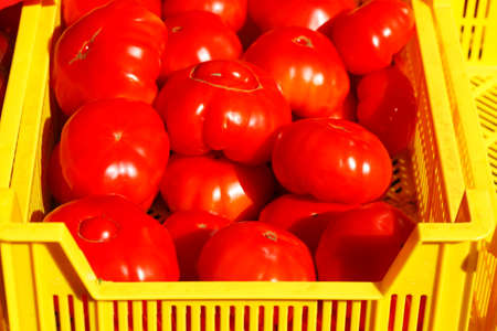 Fresh tomatoes in yellow plastic boxes  Stock Photo